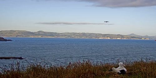 Cape Taiaroa -  live webcam , Otago Danidin