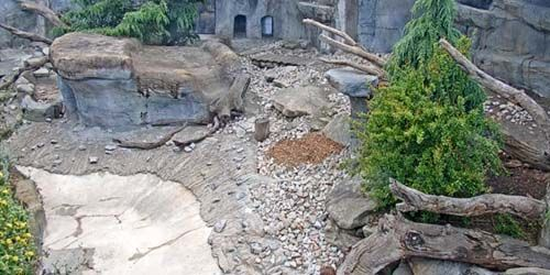 Snow leopards at the zoo -  live webcam , Victoria Melbourne